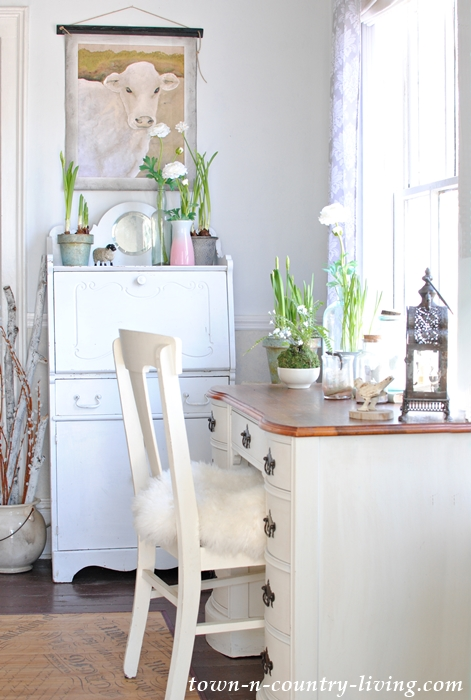 Farmhouse Entryway decorated for spring with paperwhites