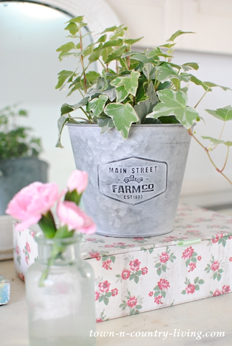 houseplant, ivy, farmhouse garden pot, carnations