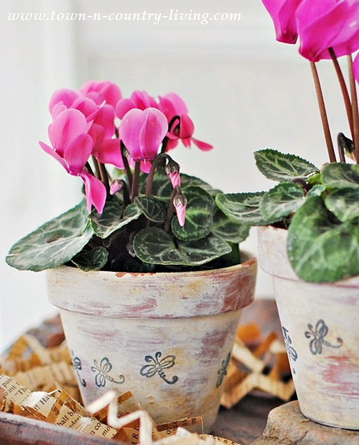aged terra cotta pots, garden pots, planters, white washed pots, decorating with plants