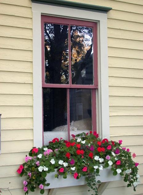 flower box, window box, gardening tips