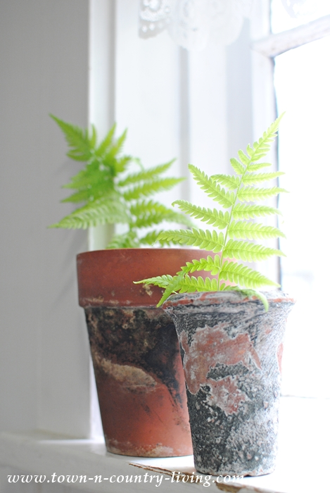 ferns in garden pots