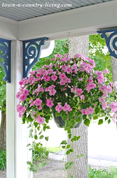 Impatiens, hanging baskets, summer porch