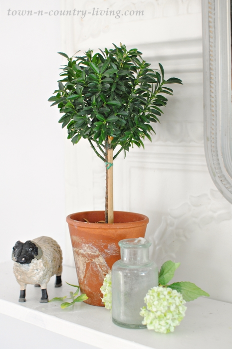 Boxwood topiary on a farmhouse shelf