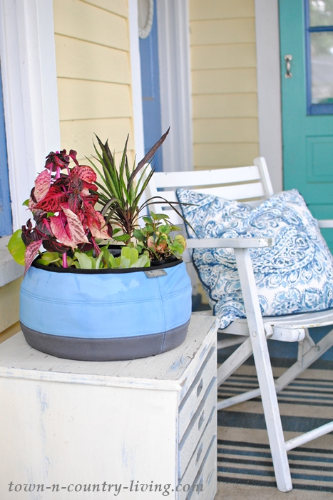 Create a container water garden with a Deco Planter