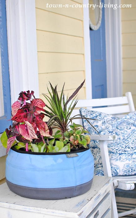 Container Water Garden made with a Deco Planter