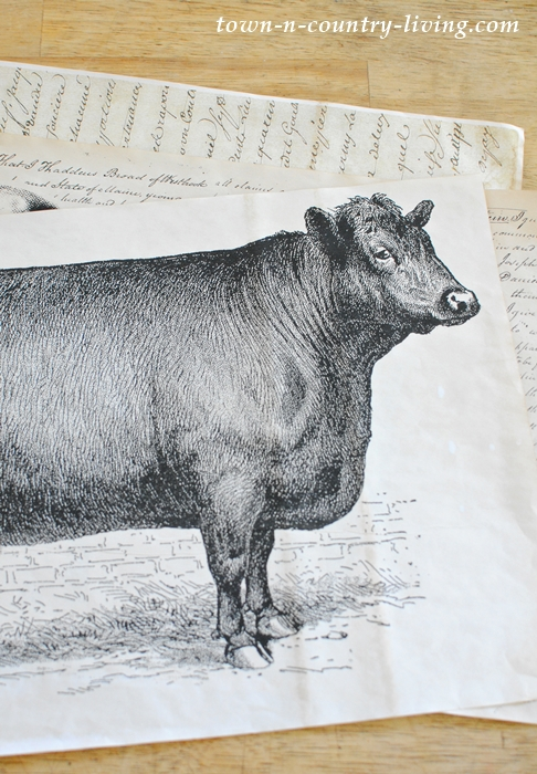Vintage Cow Poster