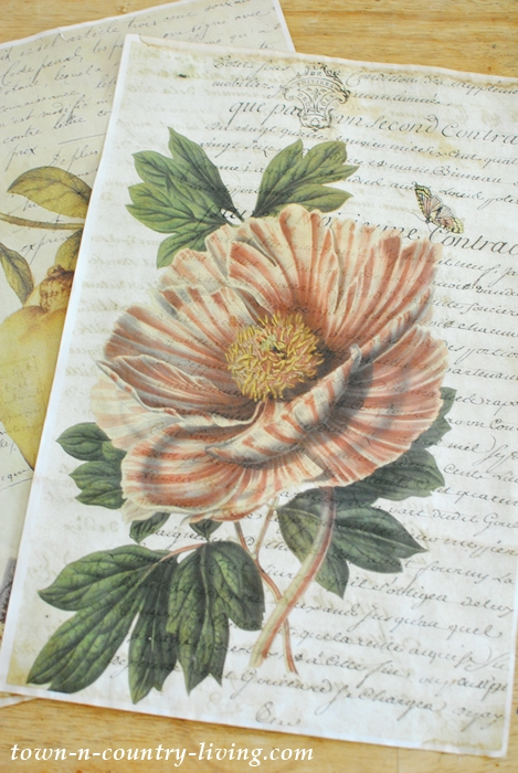 Vintage Botanical Poster to make inexpensive wall art.