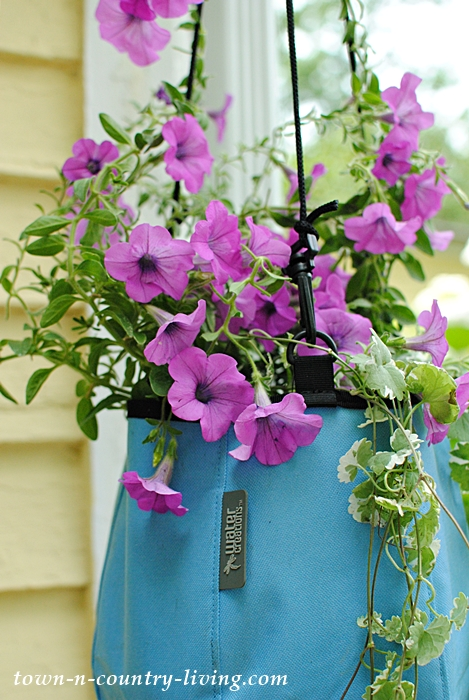 Petunias in a hanging Deco Planter