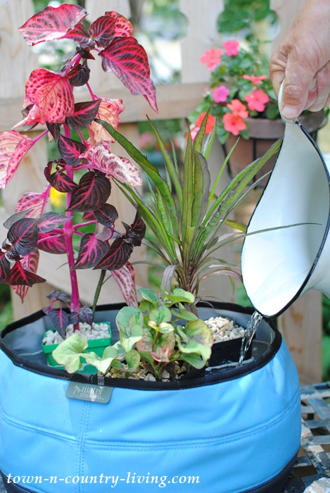 How to create a container water garden