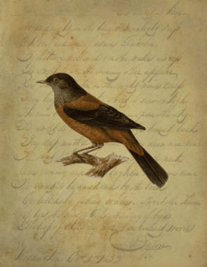 Vintage Brown Bird