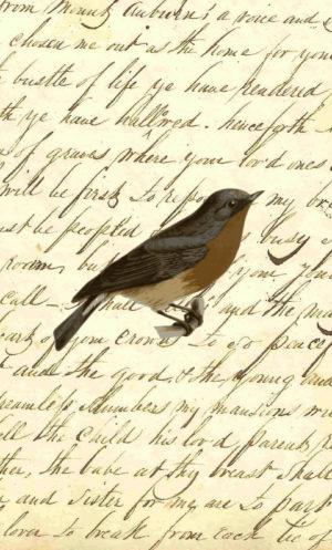 Brown Vintage Robin