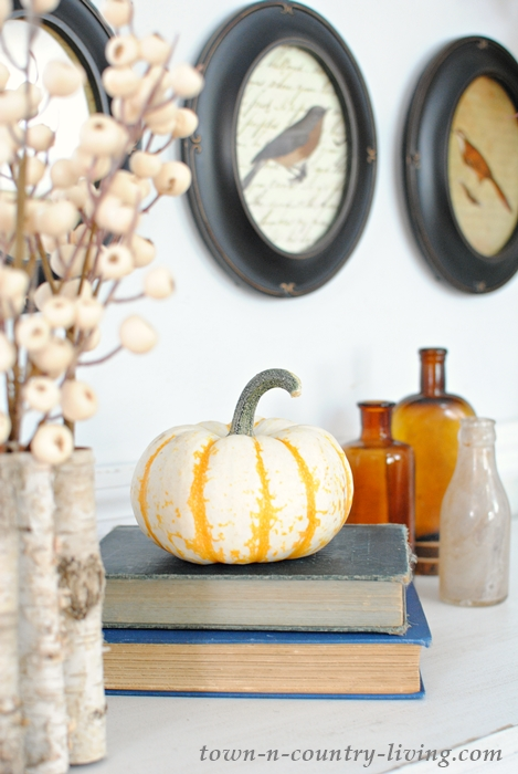 Gourds for fall decorating