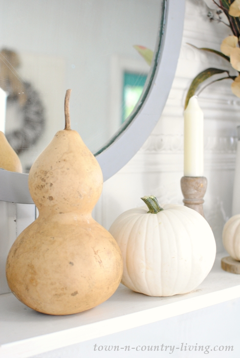Dried gourds and mini white pumpkins