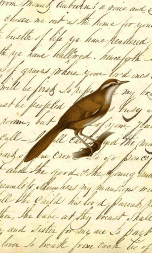 Vintage Long Brown Bird