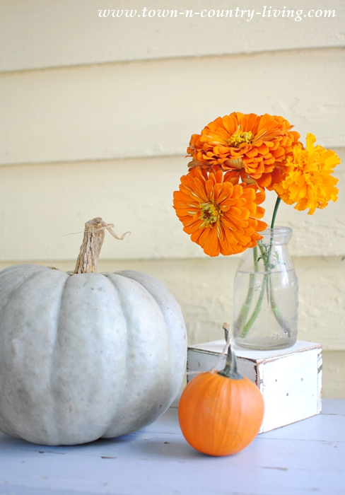 Pumpkins and Zinnias for an Outdoor Fall Vignette