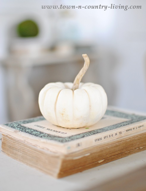 The humble beauty of a baby boo pumpkin