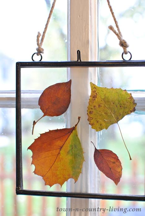 Pressed Fall Leaves