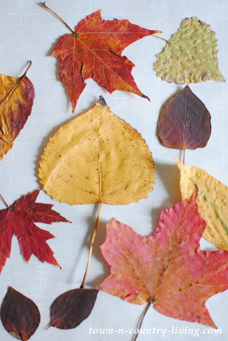 Colorful Fall Leaves for Craft Projects