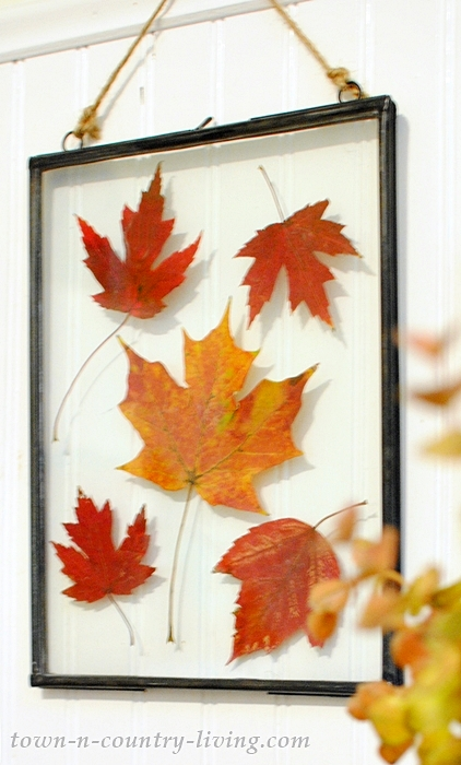 Pressed Fall Leaves - Wall Art