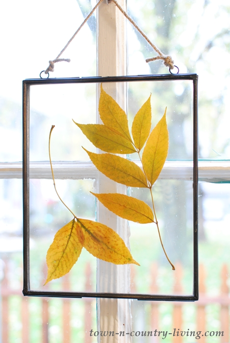 Pressed Fall Leaves - Window Art
