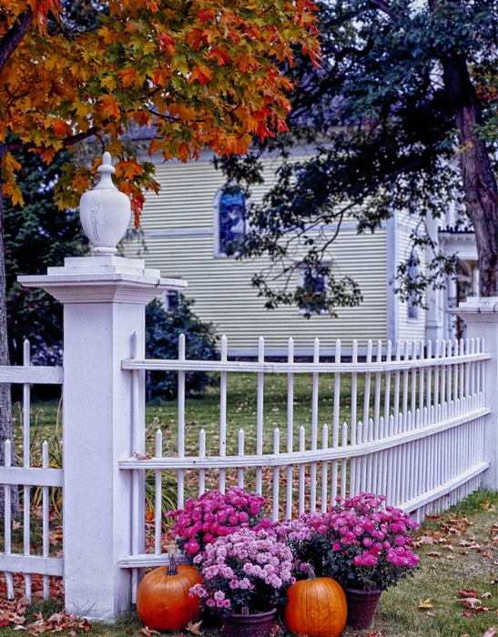 Curb Appeal with Pumpkins and Mums