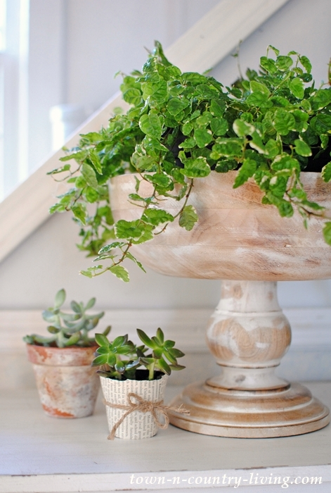 Wooden Pedestal Bowl with Ficus