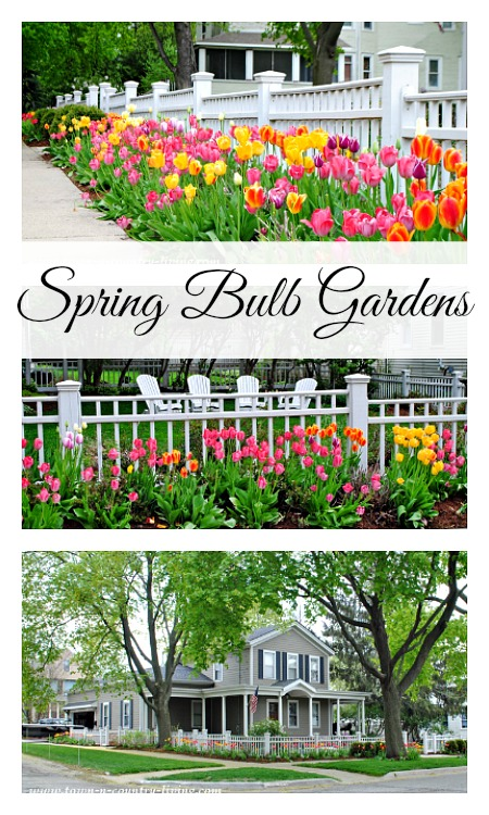 Tulips And Spring Bulb Gardens Next To White Picket Fence