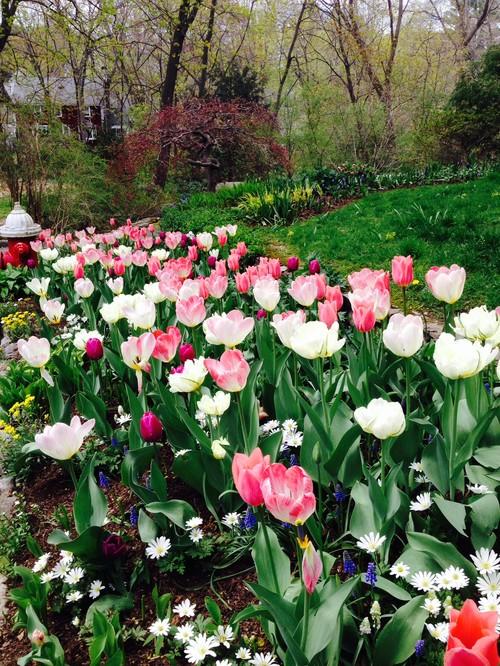Tulip Garden Beds