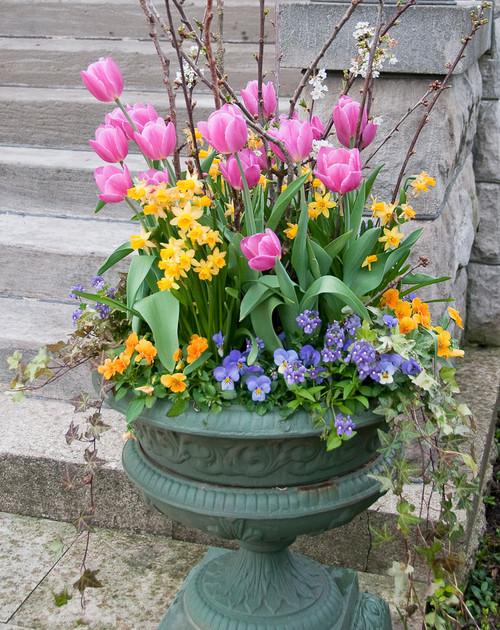 Spring Flower Container Garden