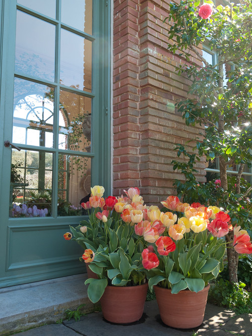 Tulips in pots at front door