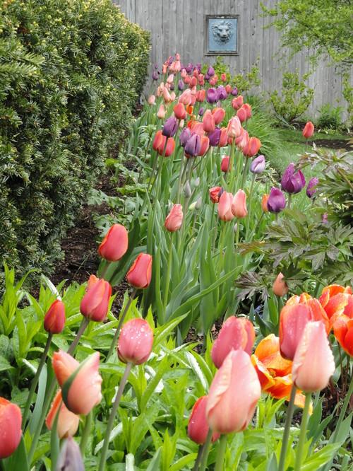 Tulip Garden Bed