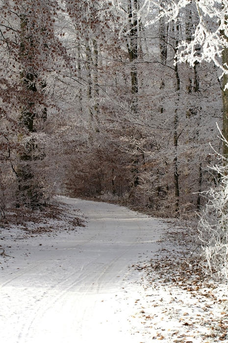 Wooded winter trail