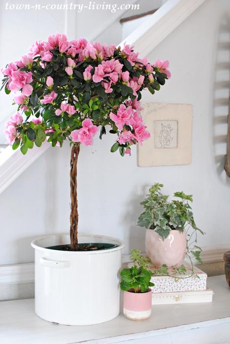 Pink Azalea Spring Vignette