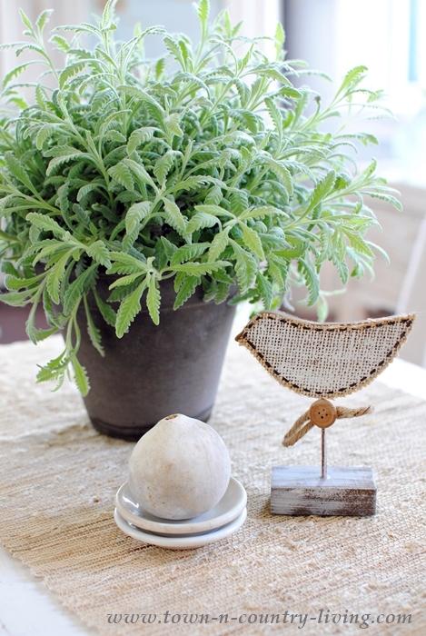 Lavender Houseplants