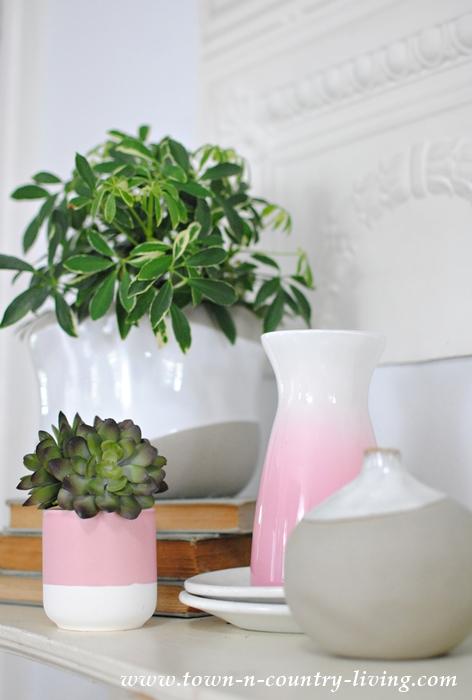 Schefflera Indoor Houseplants