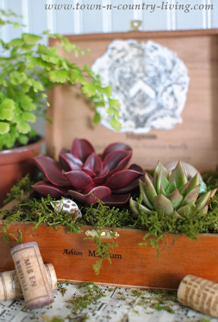 Succulents planted in cigar box