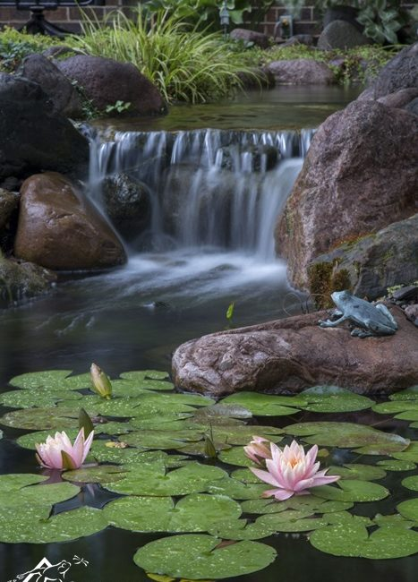 Backyard Waterfall and Pond with Water Lilies