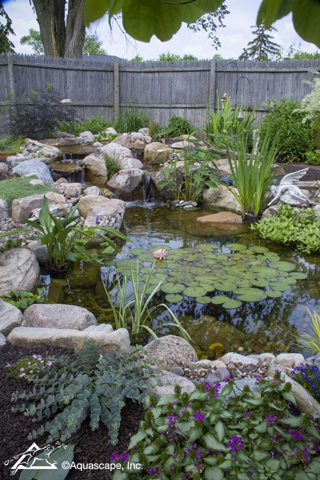 Backyard Pond with Koi and Waterlilies