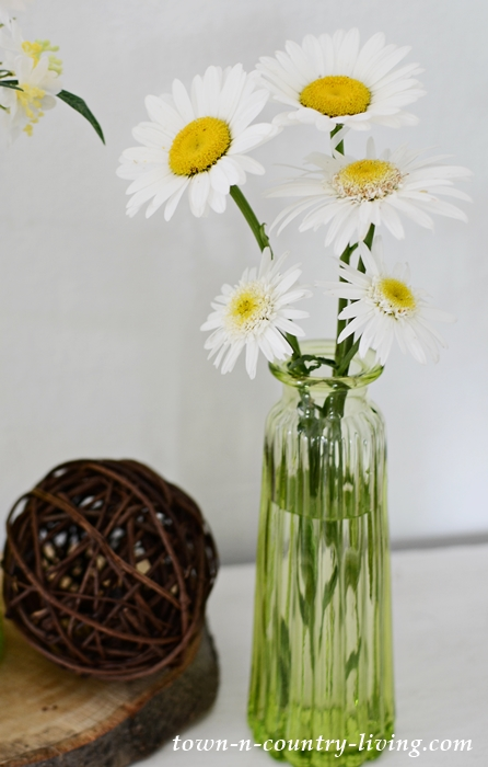 Shasta Daisies. Easy to Grow and Make Great Cut Flowers.