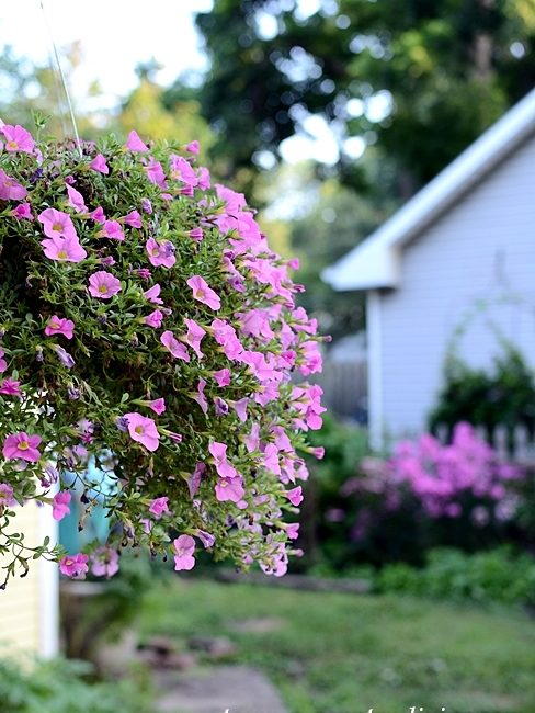 Hanging Petunia Basket - My Garden Tour with Pond