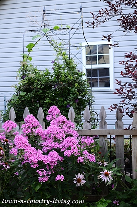 Backyard Cottage Garden Tour