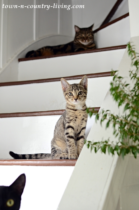 Cats on Farmhouse Staircase