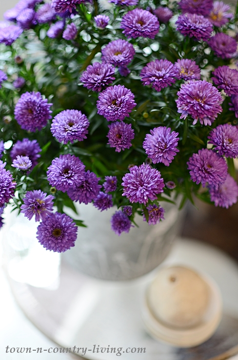 Purple Asters in Fall Home Tour