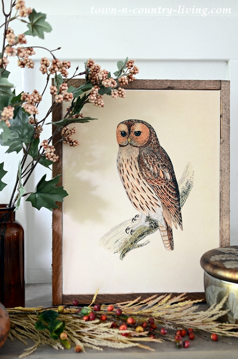 Vintage Owl Printable for Fall Decorating