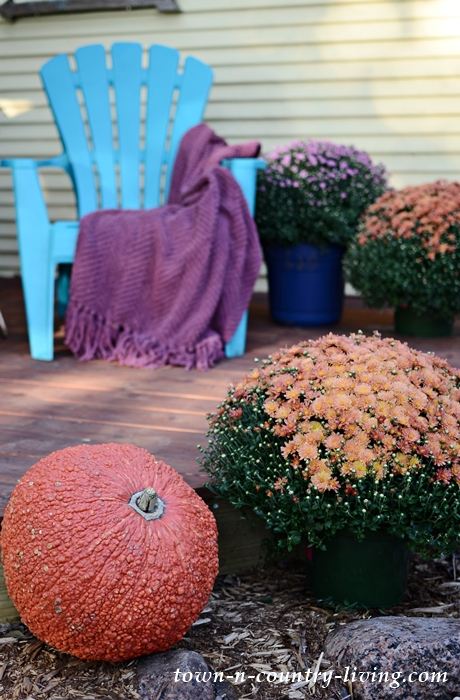 Warty Pumpkin and Colorful Mums for Outdoor Fall Decorating