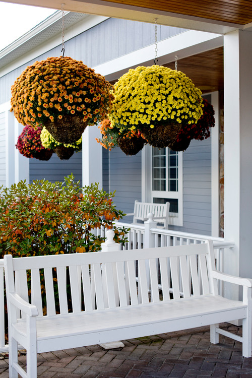 Hanging Mum Baskets on Front Porch