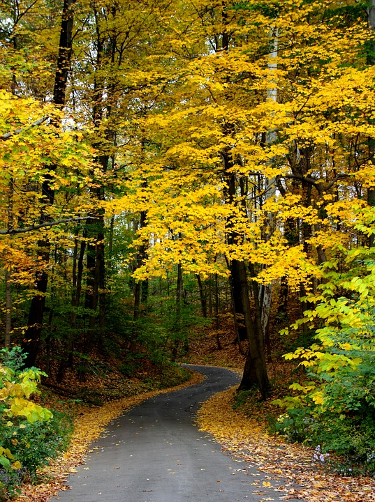 Country Road in the Fall Season