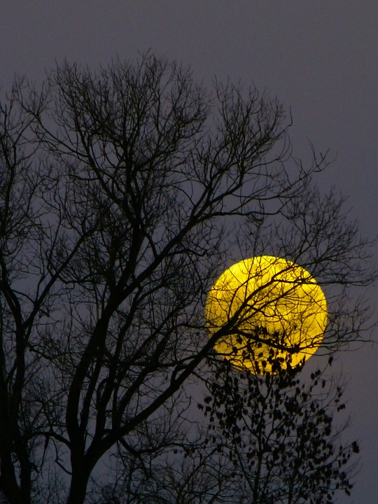 Full Moon in Autumn
