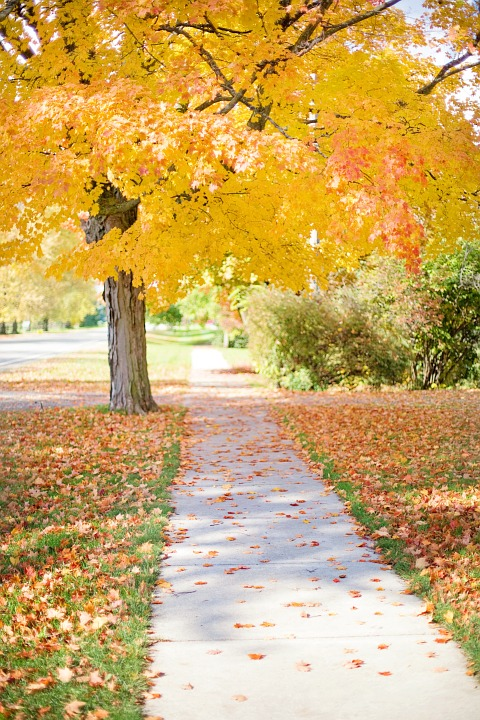 Fall Activities - a walk along a tree-lined street