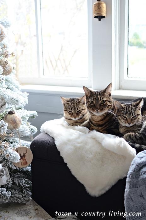 Tabby Kitties by the Christmas Tree